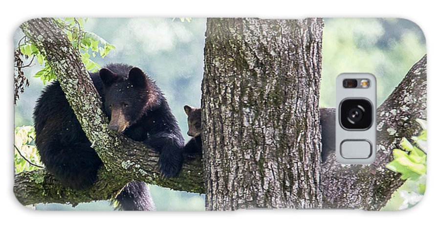 Adult Galaxy S8 Case featuring the photograph Mother Bear And Cubs by Benjamin King