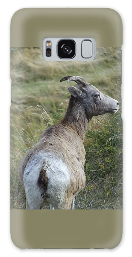 Bighorn Sheep Galaxy S8 Case featuring the photograph Mother Bighorn by Tiffany Vest