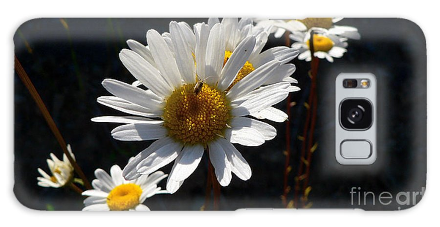 Flowers Galaxy S8 Case featuring the photograph Mountain Daisy by Larry Keahey
