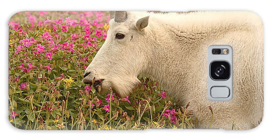Mountain Goat Galaxy Case featuring the photograph Mountain Goat In Colorful Field Of Flowers by Max Allen
