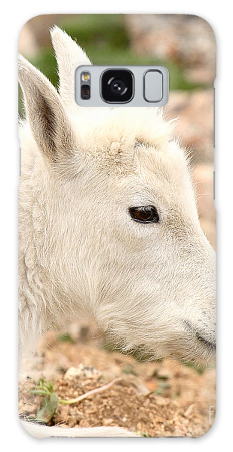Mountain Goat Galaxy Case featuring the photograph Mountain Goat Kid With Peaceful Gaze by Max Allen