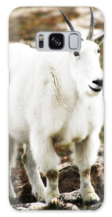 Animal Galaxy S8 Case featuring the photograph Mountain Goat by Marilyn Hunt