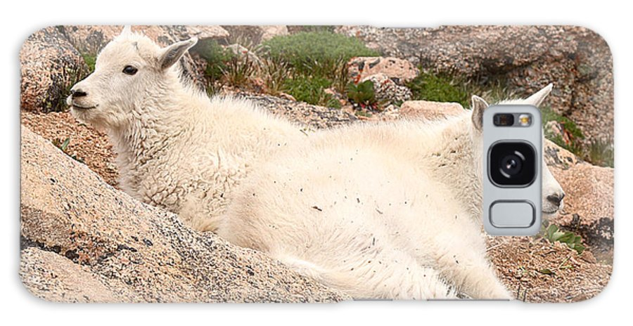 Mountain Goat Galaxy Case featuring the photograph Mountain Goat Twins by Max Allen