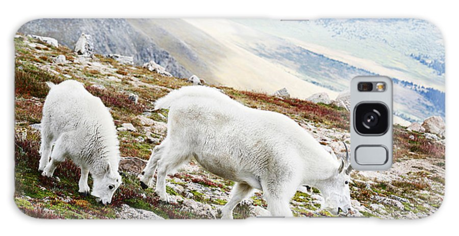 Mountain Galaxy S8 Case featuring the photograph Mountain Goats 1 by Marilyn Hunt