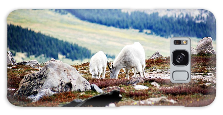 Animal Galaxy Case featuring the photograph Mountain Goats 2 by Marilyn Hunt