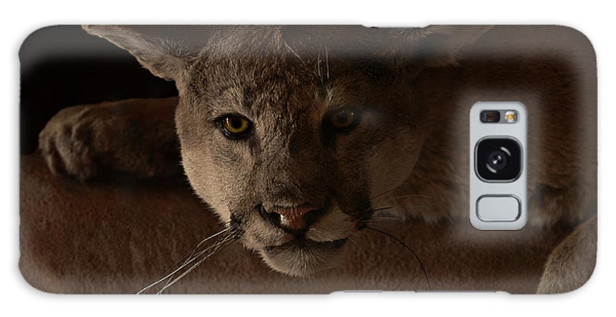 Cougar Galaxy S8 Case featuring the photograph Mountain Lion A Large Graceful Cat by Christine Till