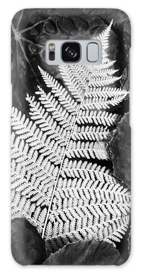 Fern Galaxy S8 Case featuring the photograph Mounts Botanical Garden 2365 by Bob Neiman