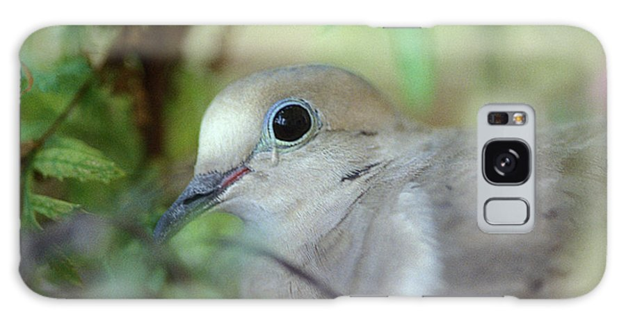 Bird Galaxy S8 Case featuring the photograph Mourning Dove by Yuri Lev