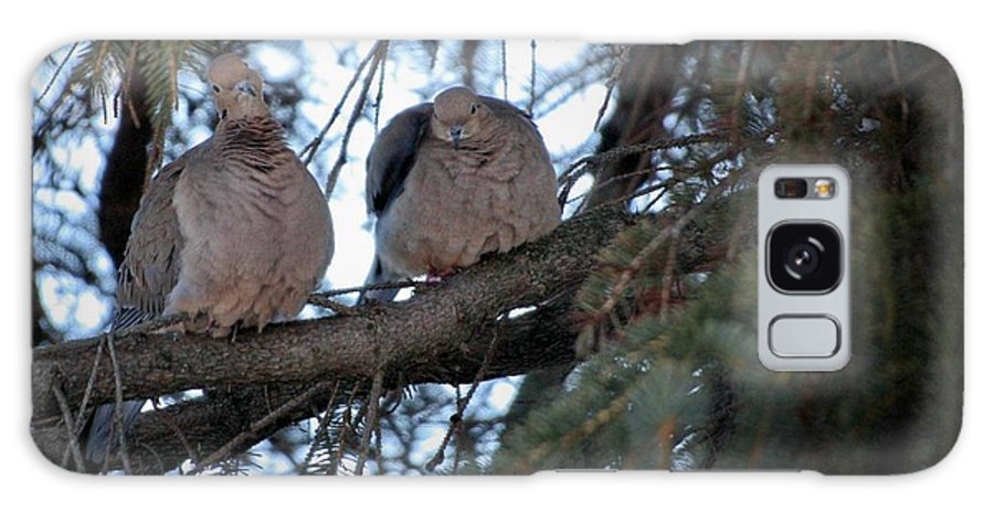 Birds Galaxy S8 Case featuring the photograph Mourning Doves by Marjorie Imbeau