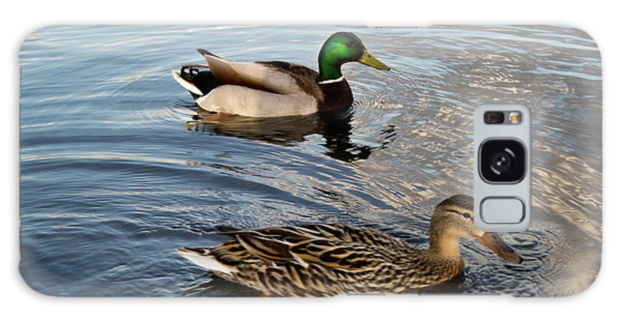 Mallard Galaxy S8 Case featuring the photograph Mr And Mrs Duck On Parade by Douglas Barnett