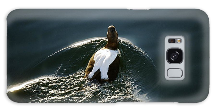 Duck Galaxy S8 Case featuring the photograph Mr. Eider by Faith Harron Boudreau