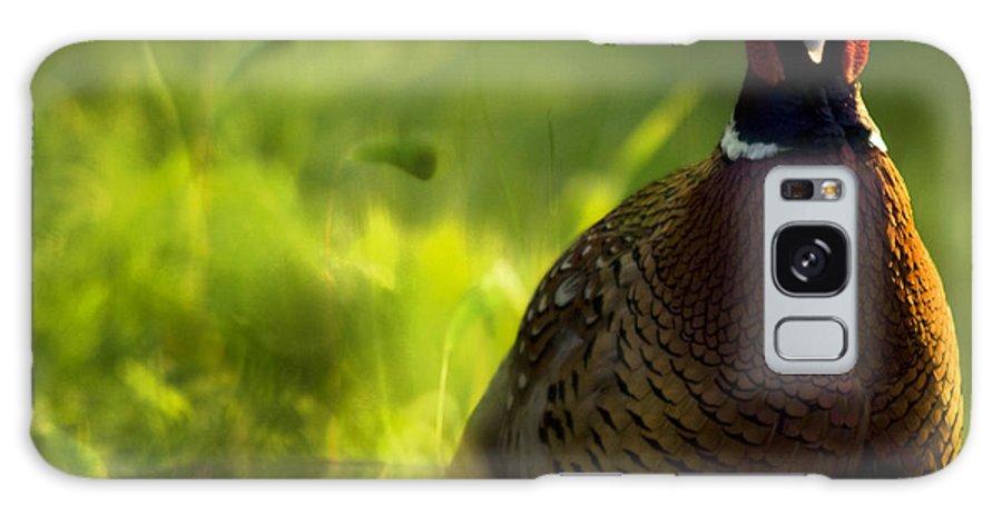 Bird Galaxy S8 Case featuring the photograph Mr Pheasant by Angel Ciesniarska