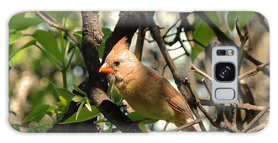 Cardinal Galaxy S8 Case featuring the photograph Mrs Cardinal by Jennie Perry