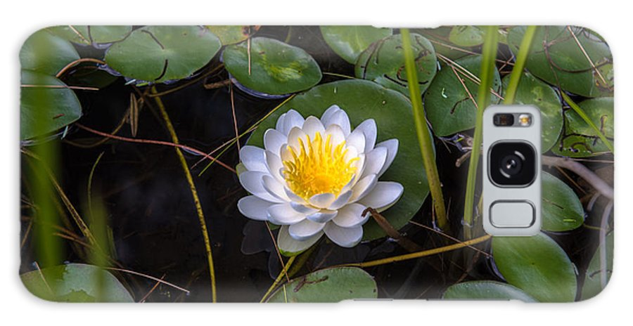 Water Lily Galaxy S8 Case featuring the photograph Mudd Pond Water Lily by Sherman Perry