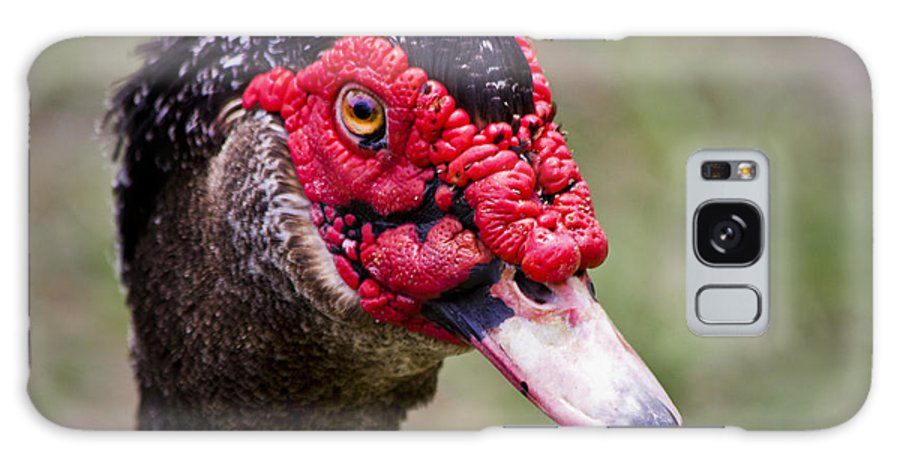 Muscovy Duck Galaxy S8 Case featuring the photograph Muscovy Duck by Roger Wedegis