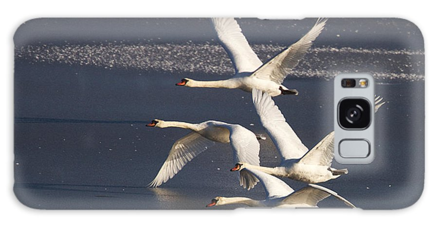 Swans Galaxy S8 Case featuring the photograph Mute Swans In Flight by Bob Kemp