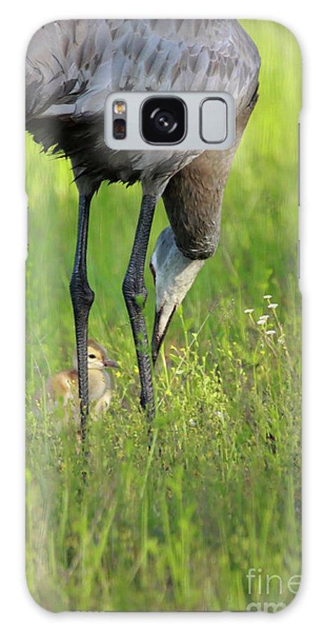 Sandhill Crane Galaxy S8 Case featuring the photograph My Little One by Deborah Benoit