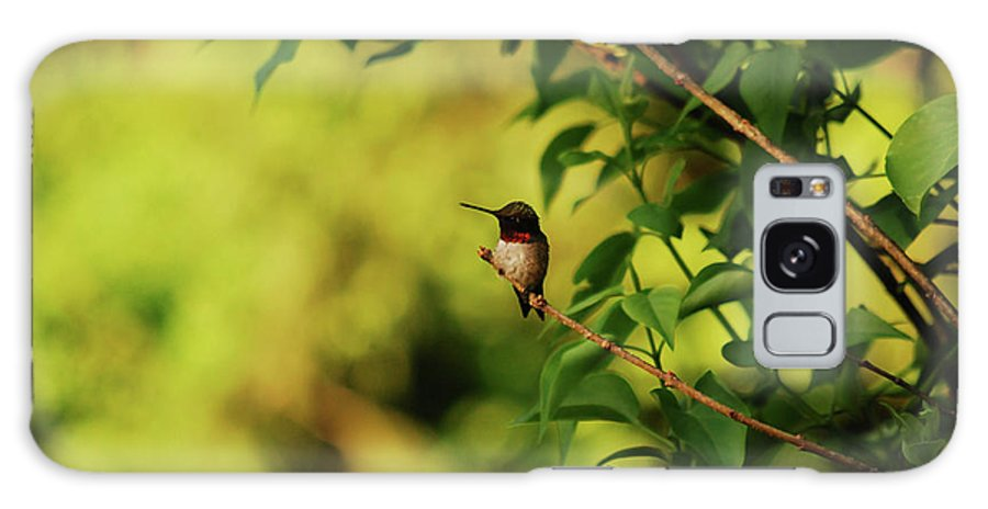 Hummingbird Galaxy S8 Case featuring the photograph My Little Visitor by Lori Tambakis