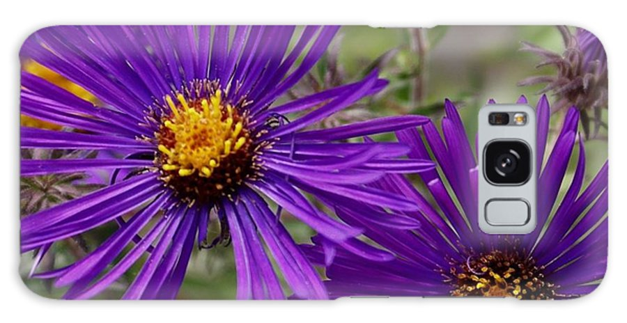 Plant Galaxy Case featuring the painting My Purple Ways by Debbie May