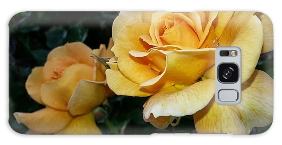 Nature Galaxy S8 Case featuring the photograph My Yellow Rose by Timothy Porter