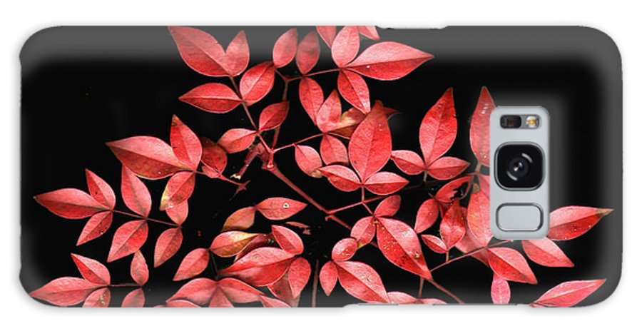 Leaves Galaxy S8 Case featuring the photograph Nadina Branch by Wayne Potrafka