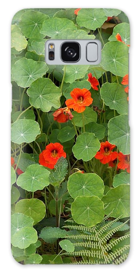 Nasturtiums Galaxy Case featuring the photograph Nasturtiums by Gale Cochran-Smith
