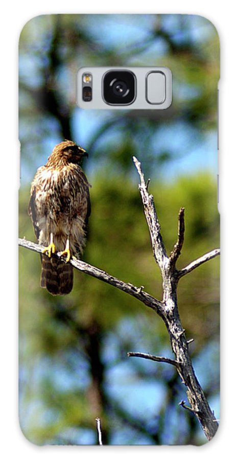 Hawk Galaxy S8 Case featuring the photograph Naturally Blown Dried Feathers by Frank Feliciano