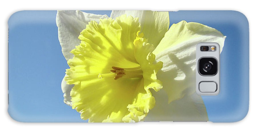 �daffodils Artwork� Galaxy S8 Case featuring the photograph Nature Daffodil Flowers Art Prints Spring Nature Art by Baslee Troutman