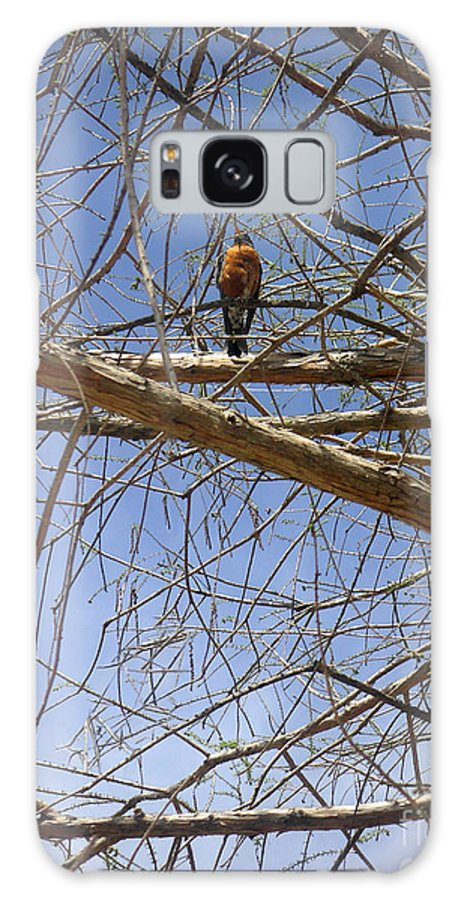 Nature Galaxy Case featuring the photograph Nature In The Wild - Annoucing Spring by Lucyna A M Green