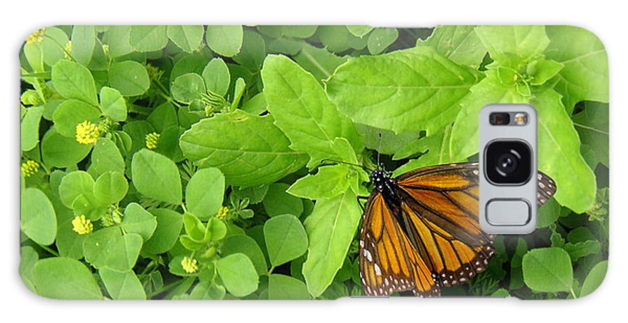 Nature Galaxy S8 Case featuring the photograph Nature In The Wild - Beautiful Solitude by Lucyna A M Green