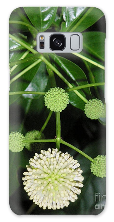 Nature Galaxy S8 Case featuring the photograph Nature In The Wild - Natural Pom Poms by Lucyna A M Green