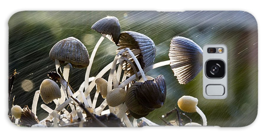 Mushrooms Rain Showers Umbrellas Nature Fungi Galaxy S8 Case featuring the photograph Nature by Sheila Smart Fine Art Photography