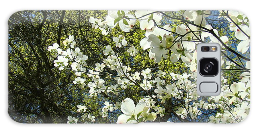 Dogwood Galaxy S8 Case featuring the photograph Nature Tree Landscape Art Prints White Dogwood Flowers by Baslee Troutman