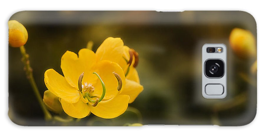 Flower Photography Galaxy S8 Case featuring the photograph Natures Colours 001 by Kevin Chippindall
