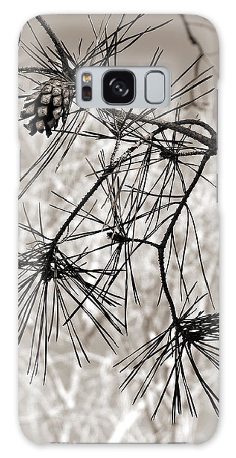 Tree Galaxy Case featuring the photograph Needles Everywhere by Marilyn Hunt
