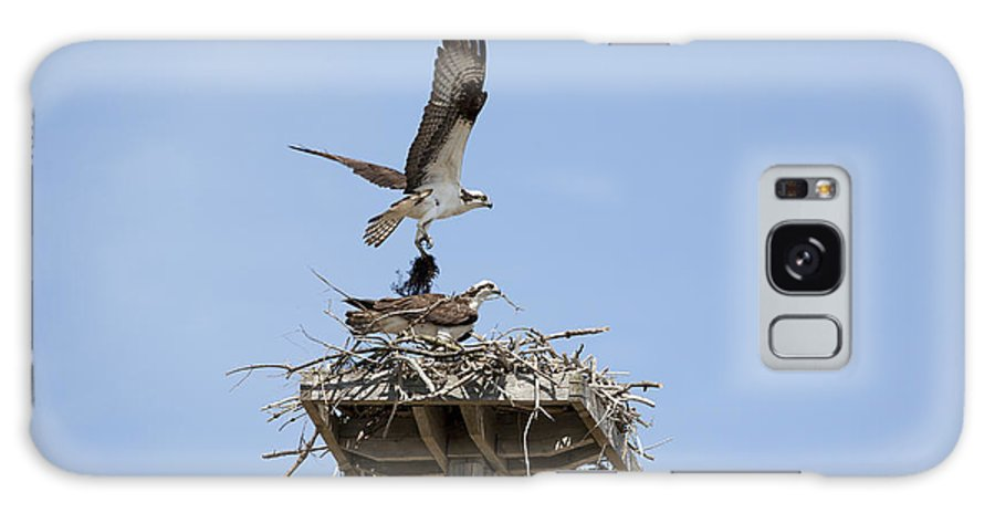 Osprey Galaxy Case featuring the photograph Nesting Osprey In New England by Erin Paul Donovan