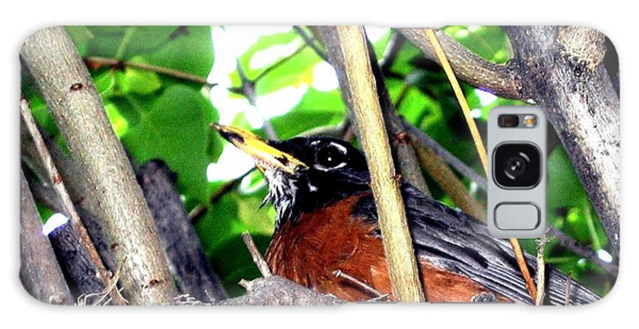 Robin Galaxy S8 Case featuring the photograph Nesting Robin by Will Borden
