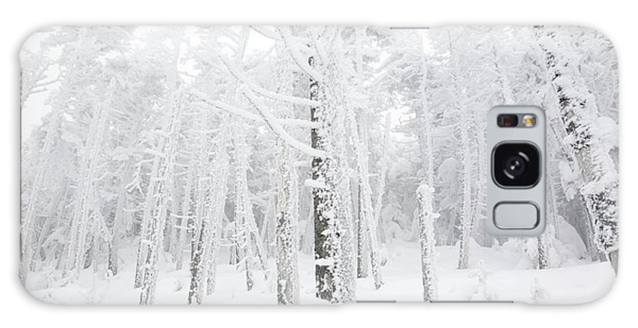 Snow Covered Galaxy Case featuring the photograph New England - Snow Covered Forest by Erin Paul Donovan