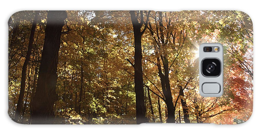 Forest Canopy Galaxy Case featuring the photograph New England Autumn Forest by Erin Paul Donovan