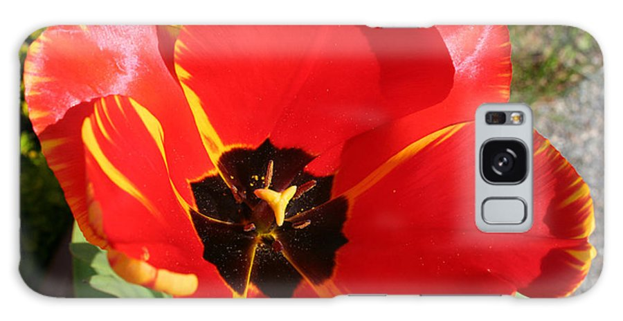 Red Tulips Galaxy Case featuring the photograph New Spring Beginnings by Mary Gaines