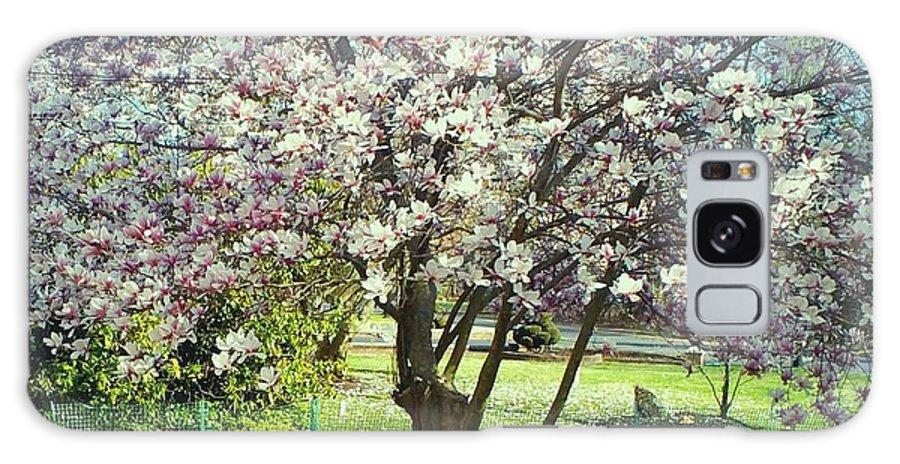 Landscape Galaxy S8 Case featuring the photograph North American Magnolia Tree by Michelle Caraballo