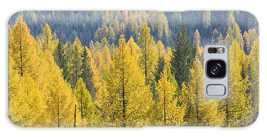 Trees Galaxy S8 Case featuring the photograph North Idaho Gold by Idaho Scenic Images Linda Lantzy