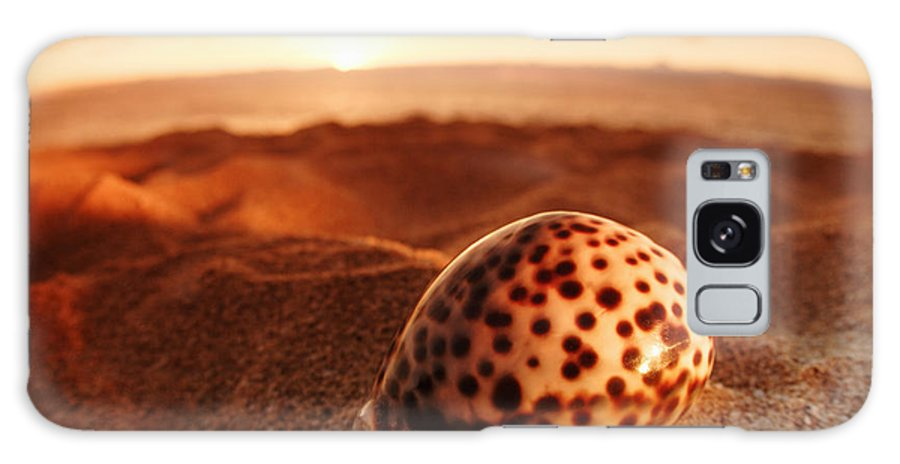 Background Galaxy S8 Case featuring the photograph North Shore Seashell by Vince Cavataio - Printscapes