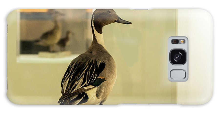Anas Acuta Galaxy S8 Case featuring the photograph Northern Pintail by Jarmo Honkanen