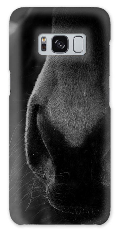 Horse Galaxy S8 Case featuring the photograph Nose Best by Hannah Breidenbach