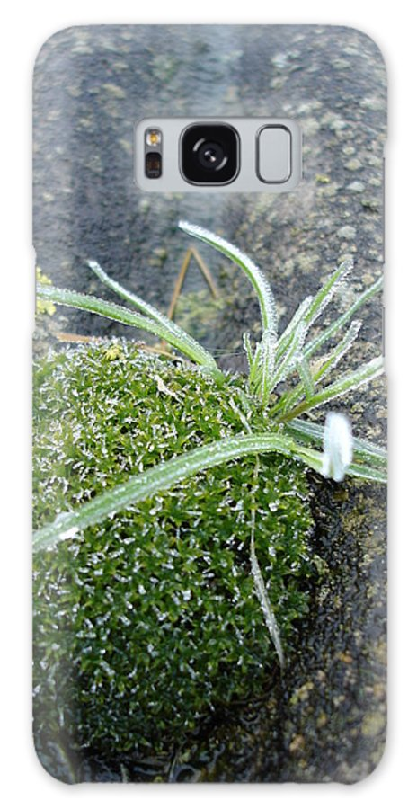 Green Galaxy S8 Case featuring the photograph Not Quite A Roof Garden by Susan Baker