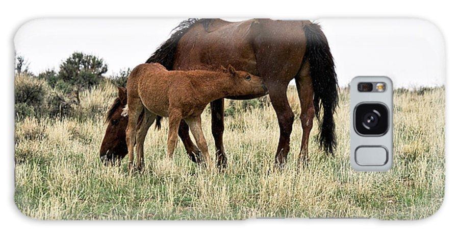 Wild Horse Galaxy S8 Case featuring the photograph Nursing In The Rain by Rodney Cammauf