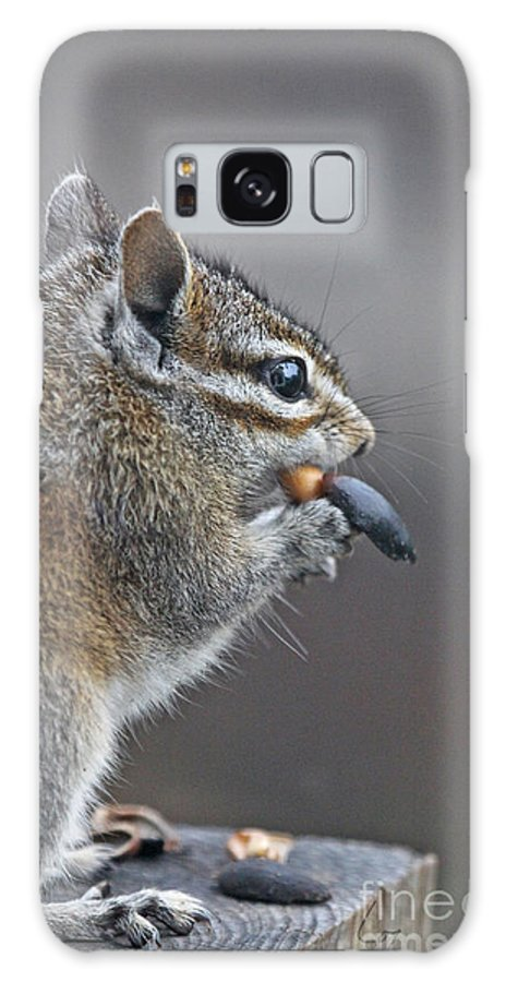 Nuts Chipmunk Shells Animals Wildlife Words Cute Eating Galaxy S8 Case featuring the photograph Nuts by Lozja Mattas