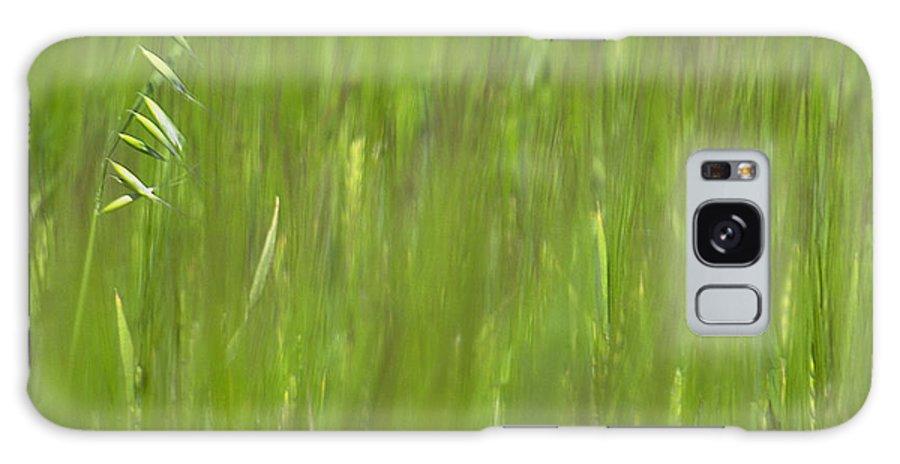 Oat Field Galaxy S8 Case featuring the photograph Oatfield by Michael Mogensen