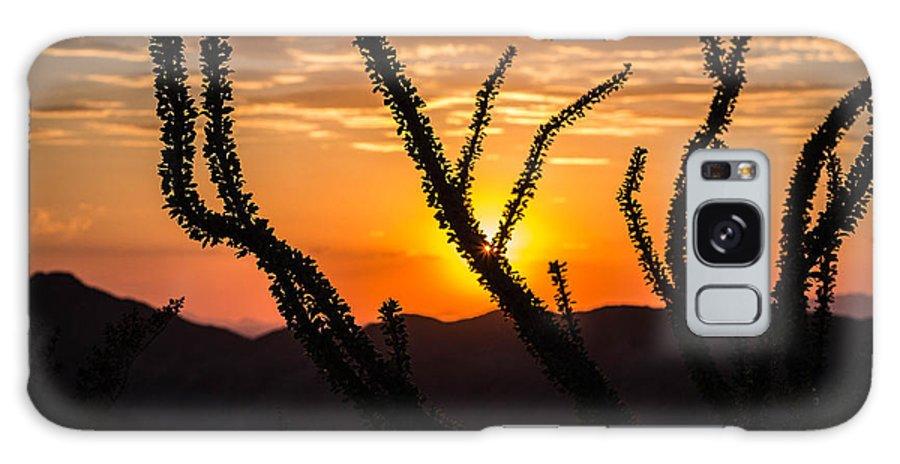 Ocotillo Galaxy S8 Case featuring the photograph Ocotillo by Brandon Cunnigham